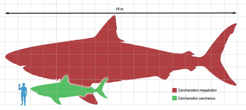 Megalodon_scale1