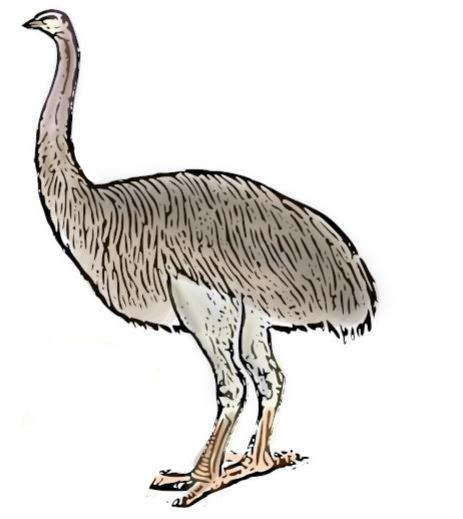 Resuelta otra incógnita sobre las aves gigantes del Plioceno de Lanzarote